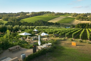 Montalto Vineyard and Olive Grove
