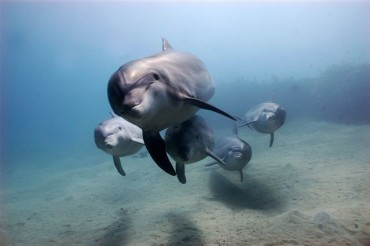 Moonraker Dolphin Swims